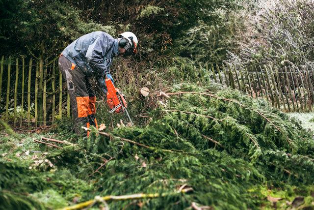 庭木を伐採する専門業者