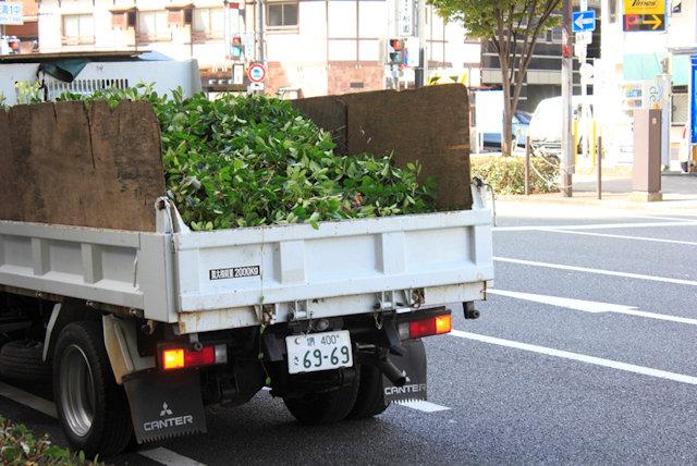 庭木を処分する不用品回収業者のイメージ