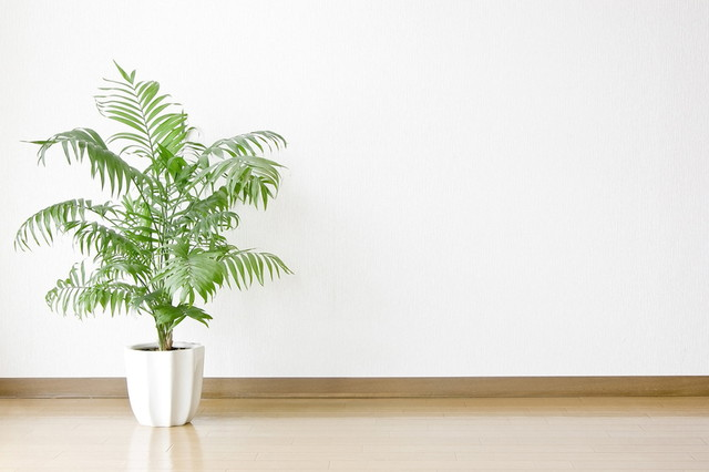 観葉植物の処分方法とは?簡単な捨て方を徹底解説