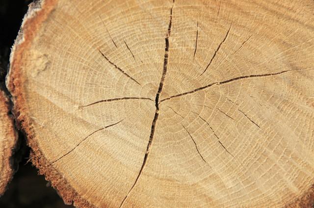 木材を無料・有料で処分できる8つの捨て方