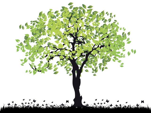 木材の寿命や廃棄のタイミング